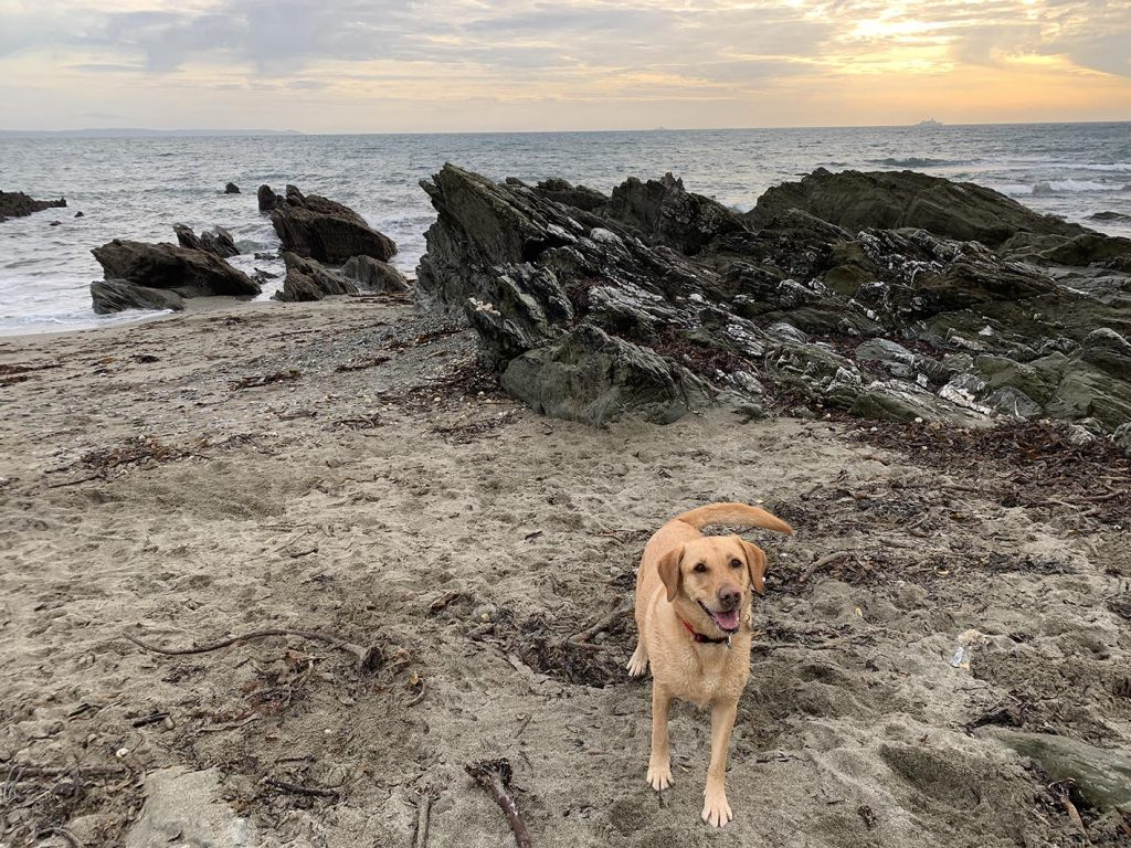 Dogs welcome - Looe View Cottage